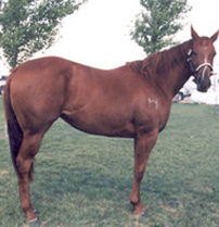 Amared 2004 Sorrel Mare By Red purchased from Blane Schvaneveldt